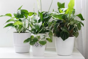 group of house plants in white decorative containers