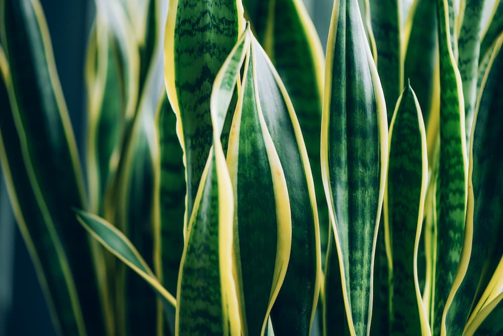 leaves on a green house plant